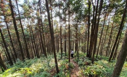 Sustainability and Climate Change - Understanding Directors' Duties